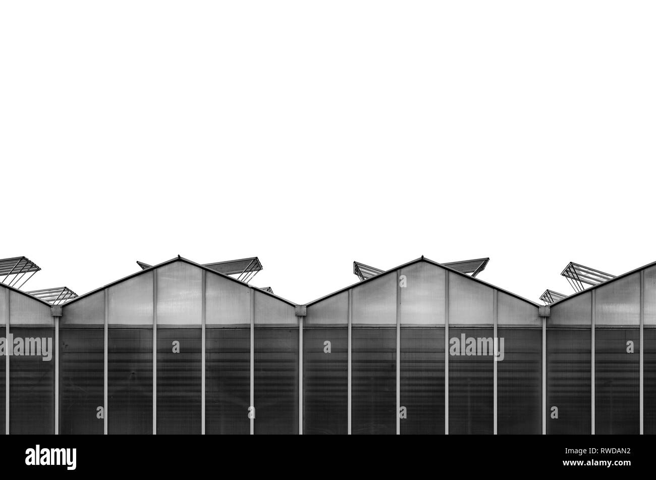 Large Industrial Greenhouse. Black and White Image of the Glass Greenhouse Facade with Open Windows on the Roof Stock Photo
