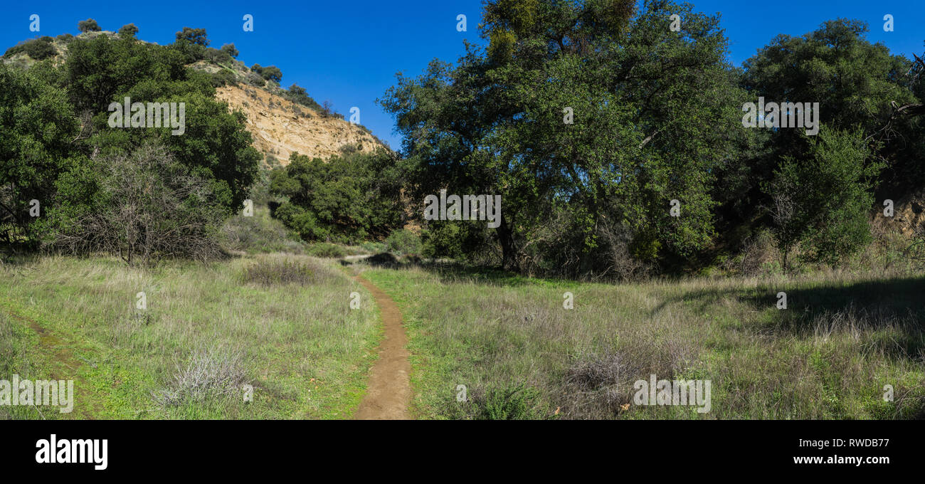 Dirt walking trail leads the hiker through grass and oak trees in a California valley. - Stock Image
