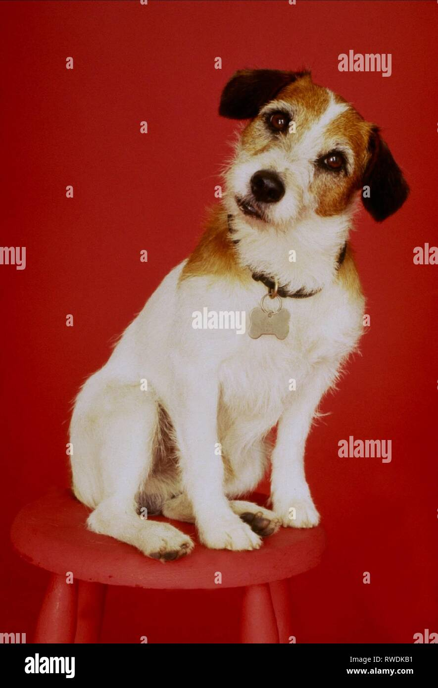 EDDIE THE DOG, FRASIER, 1993 - Stock Image