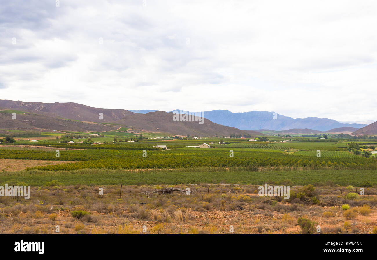 Robertson wine valley at the heart of the wine route, situated in the fertile Robertson valley, agriculture is the mainstay of the town's economy - Stock Image