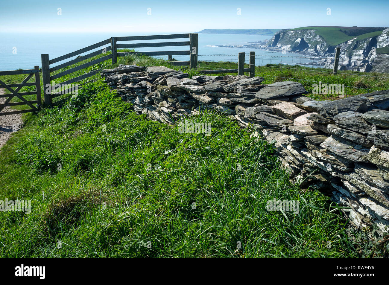 At the top of the cliff between Challaborough Beach and Ayrmer Cove, Ringmore, South Devon, UK - Stock Image