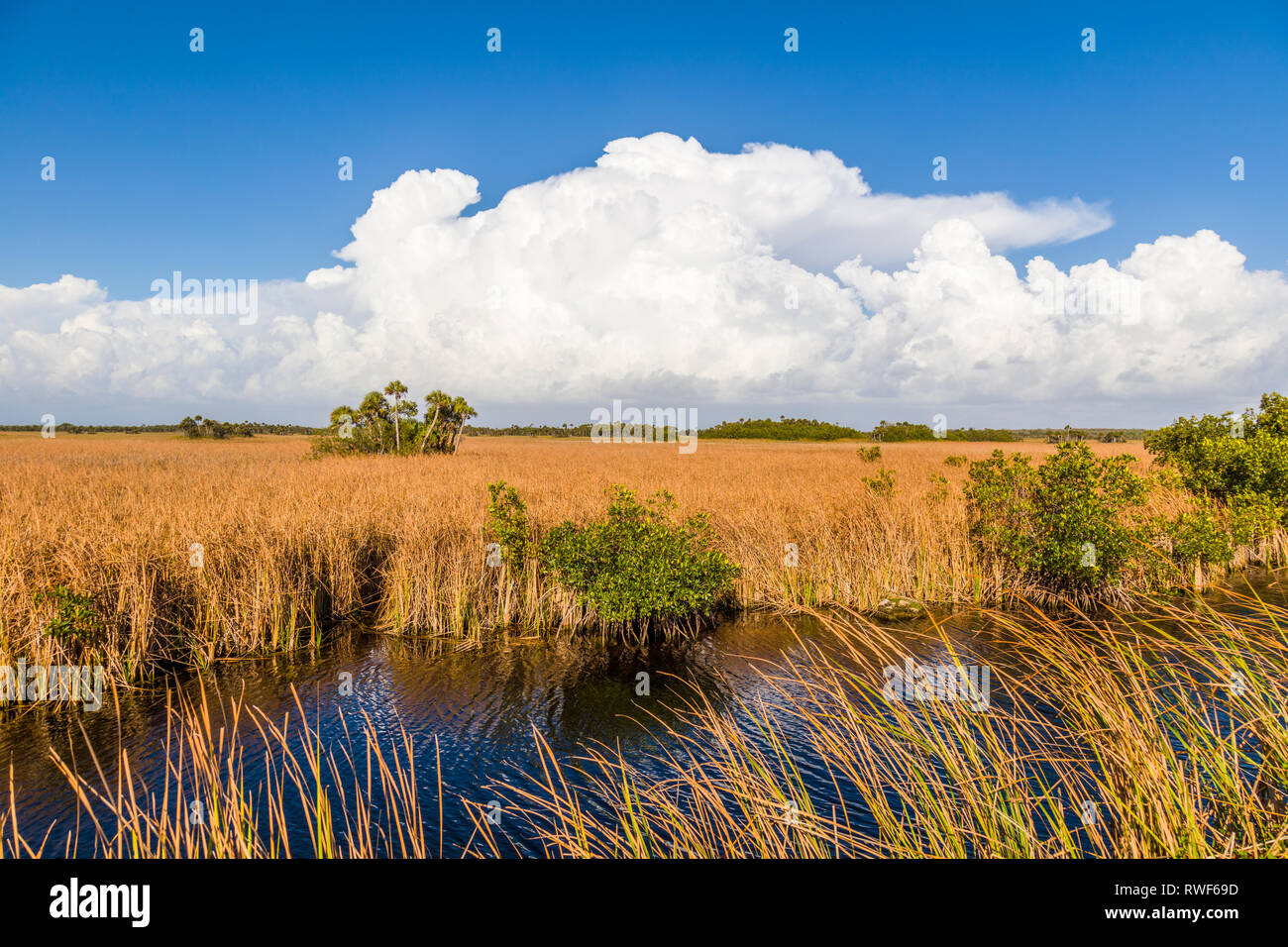 River of grass with Big white clouds in blue sky along Tamiami Trail in Big Cypress National Preserve in southwest Florida Stock Photo