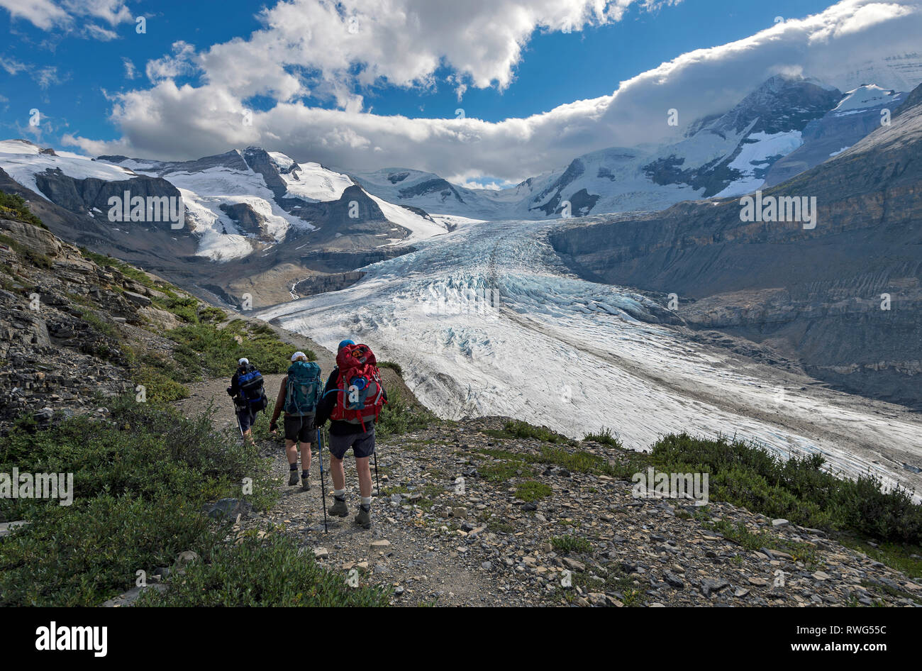 Three females hike the trail to Snowbird pass, overlooking the Robson glacier, Mt. Robson Provincial Park, British Columbia, Thompson Okanagan region, - Stock Image