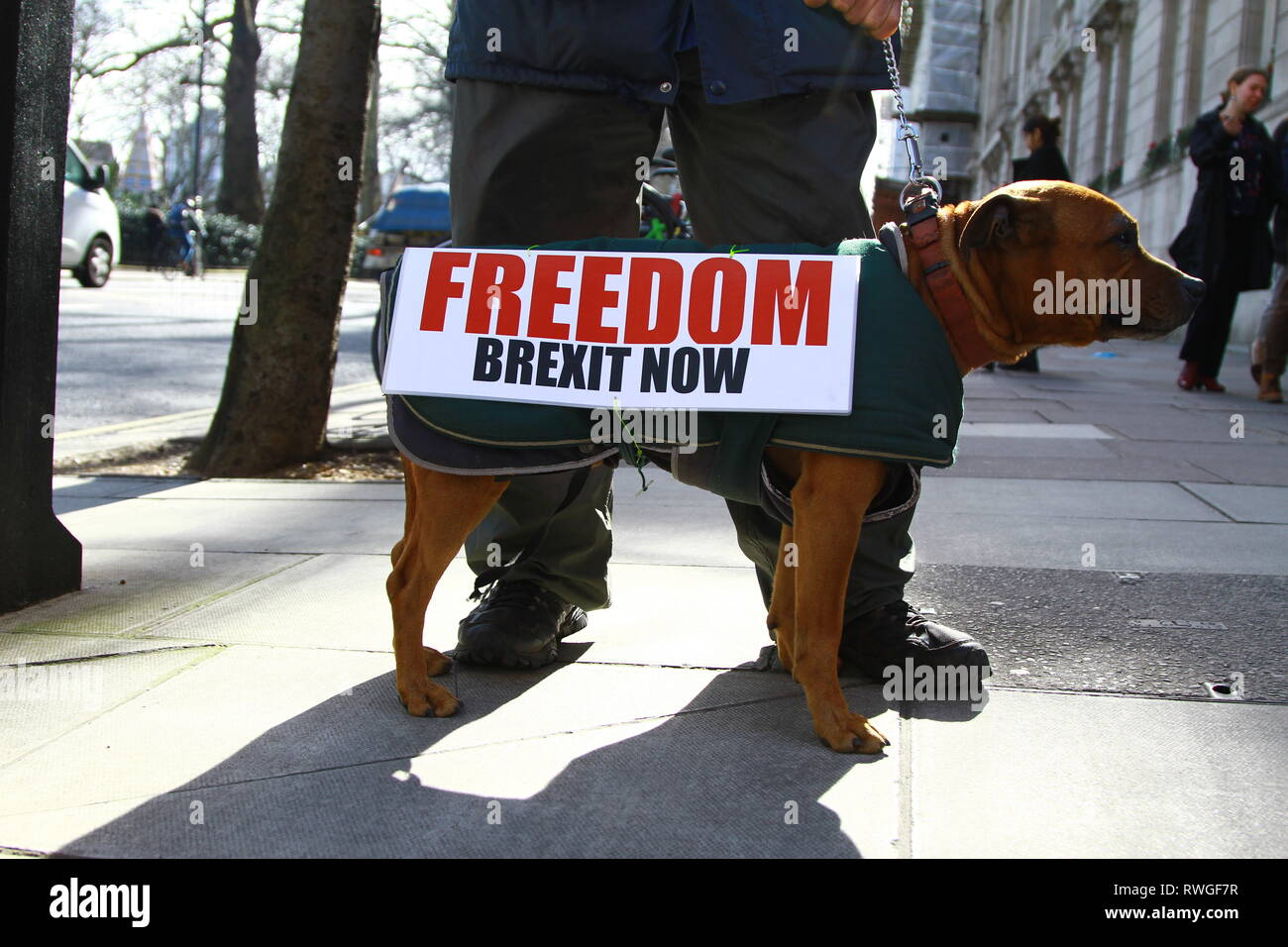 A DOG NAMED STEWART AND THE OWNER OF THE DOG ALSO NAMED STEWART STAND IN THE STREETS OF WESTMINSTER EXPRESSING PRO BREXIT SIGN FREEDOM BREXIT NOW. MOOD OF THE NATION. PUBLIC OPINION. - Stock Image