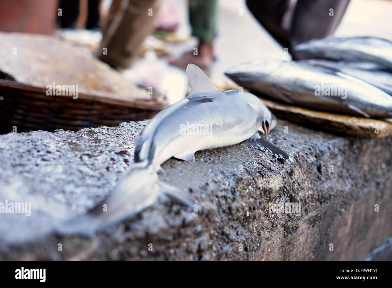 Baby Sharks for sale in Traditional Seafood market Stock Photo