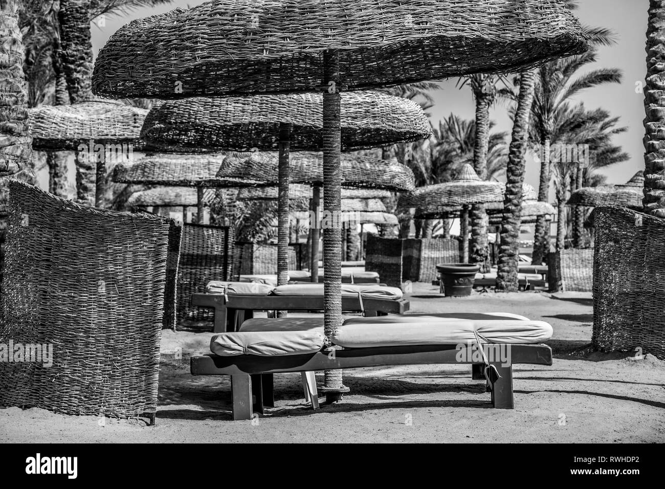 Empty beach deck chairs and umbrellas on a hot summer day in black and white - Stock Image