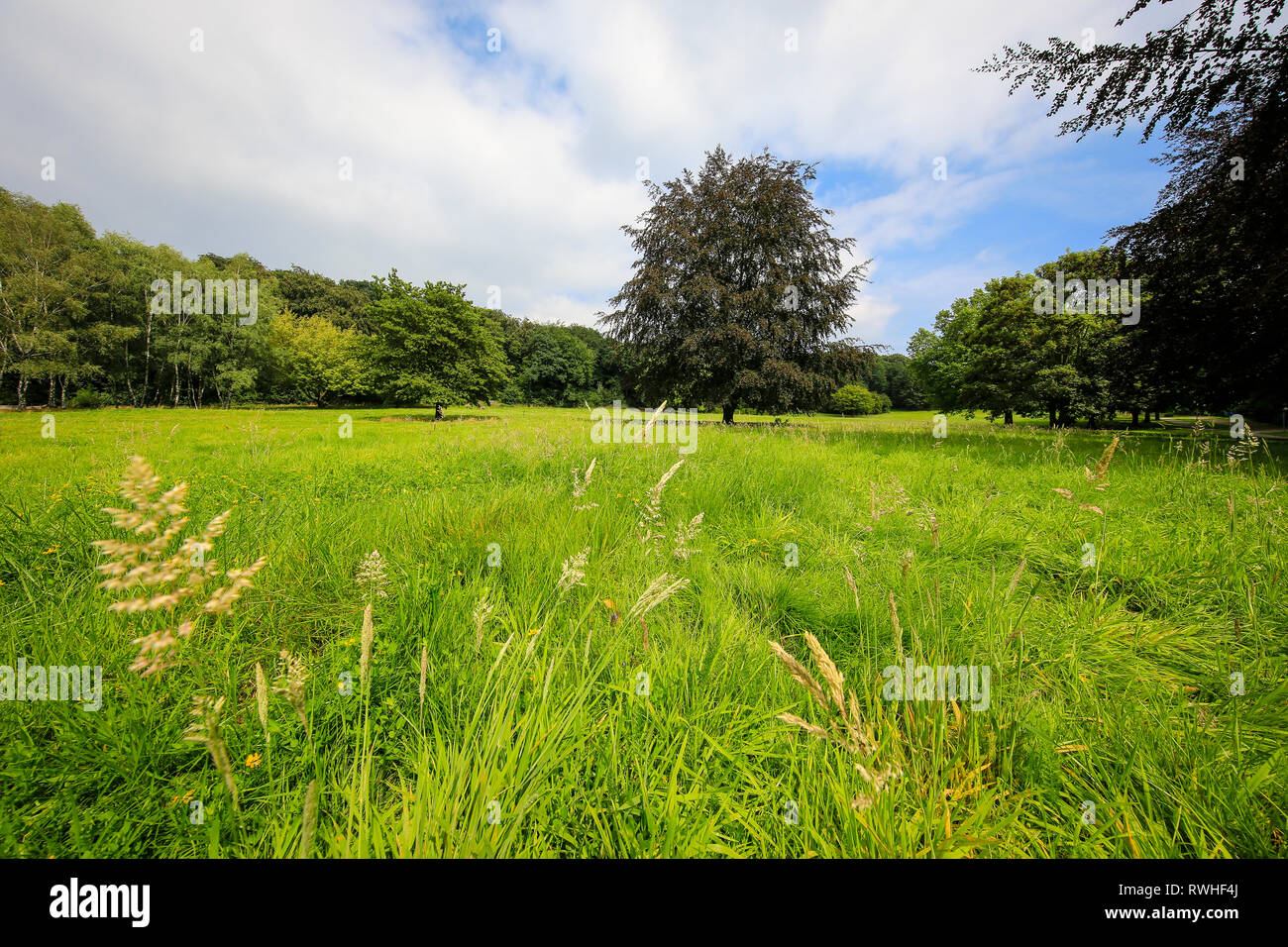 Essen, North Rhine-Westphalia, Ruhr area, Germany - The Hallopark between Stoppenberg and Schonnebeck is one of the oldest green spaces in Essen, here Stock Photo