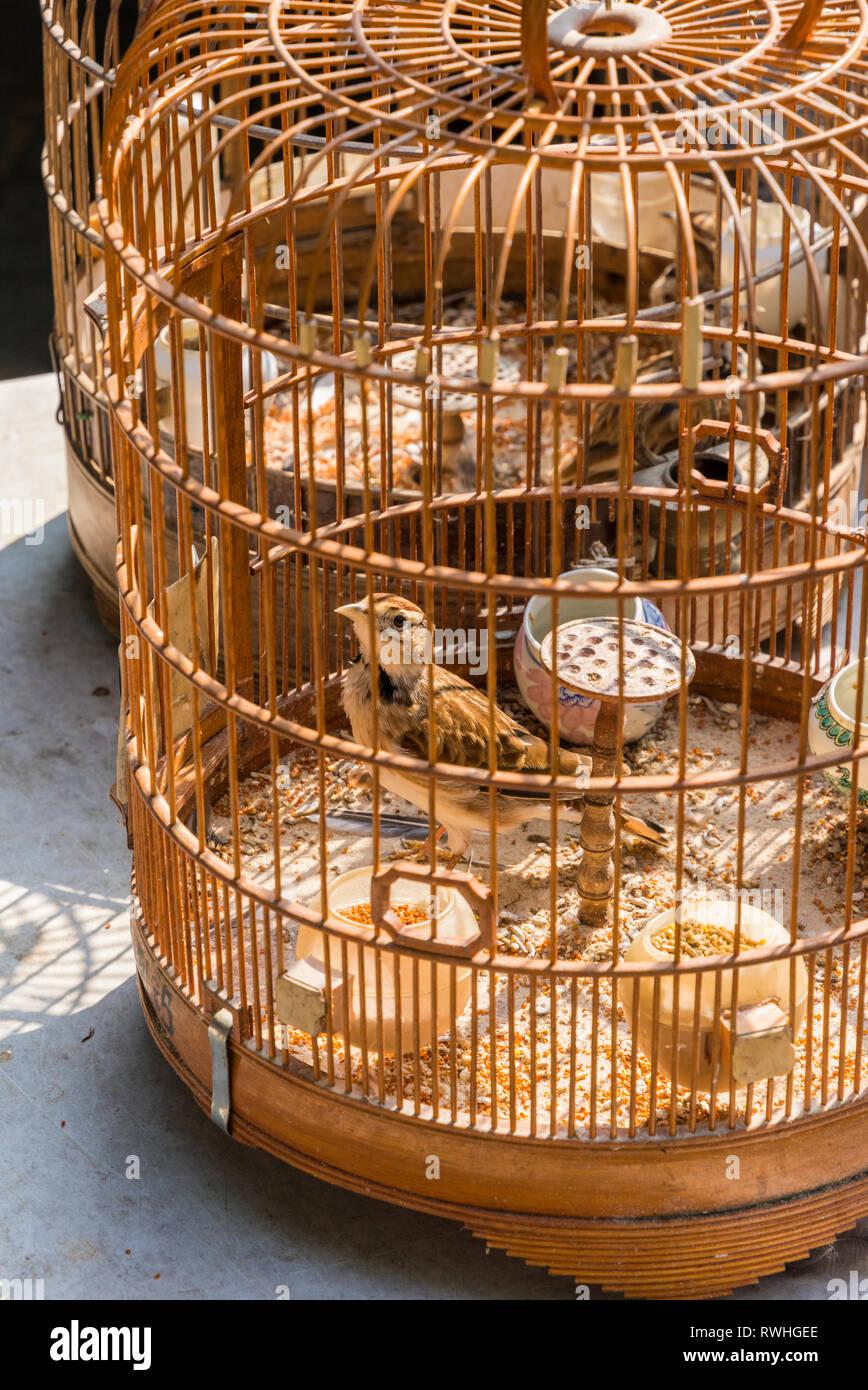 Selective focus on a bird in an ornate wooden cage at the Hong Kong Bird Market, Yuen Po Street Bird Garden, Mong Kok, Hong Kong - Stock Image