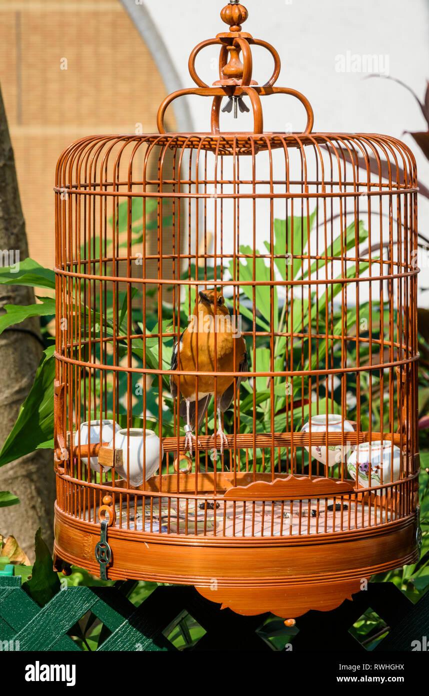 Bird in an ornate wooden cage at the Hong Kong Bird Market, Yuen Po Street Bird Garden, Mong Kok, Hong Kong - Stock Image