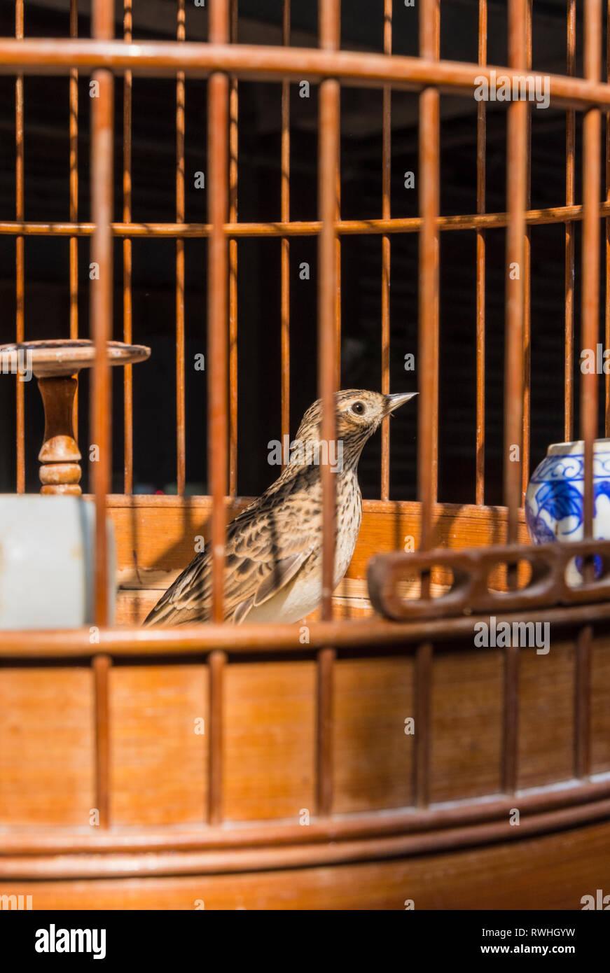 Bird in a cage at the Yuen Po Street Bird Garden in Mong Kok, Hong Kong - Stock Image