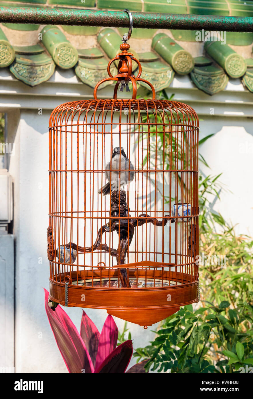 Bird in a cage at the bird market in the Yuen Po Street Bird Garden, Mong Kok, Hong Kong - Stock Image
