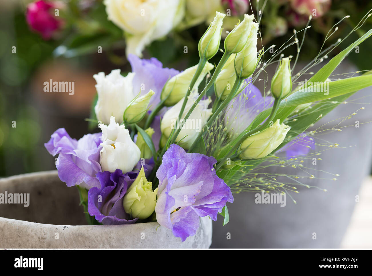 botany, Eustoma in a vessel, Caution! For Greetingcard-Use / Postcard-Use In German Speaking Countries Certain Restrictions May Apply - Stock Image