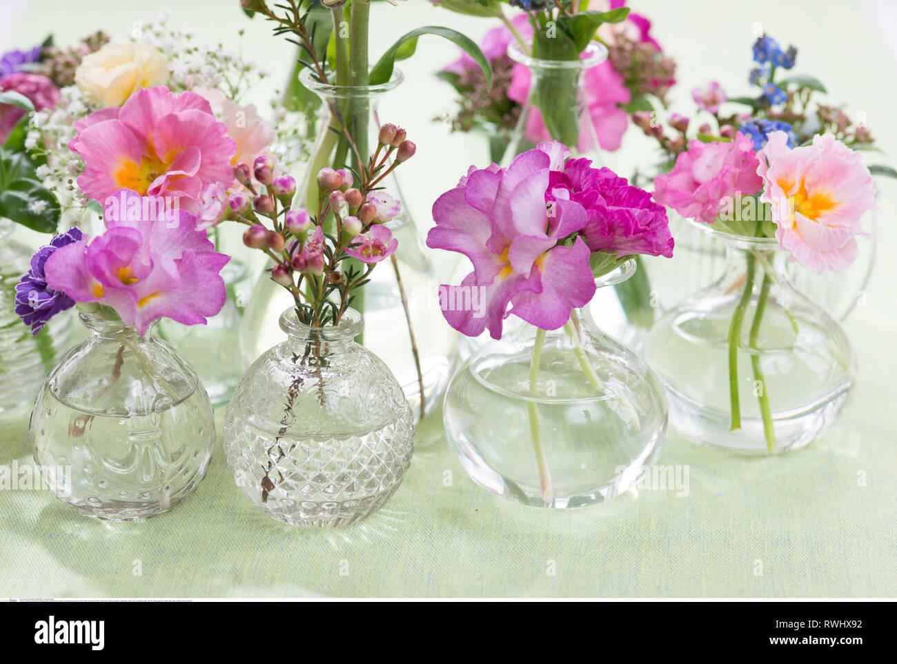 botany, ruched spring blooms in mini vases, Caution! For Greetingcard-Use / Postcard-Use In German Speaking Countries Certain Restrictions May Apply - Stock Image