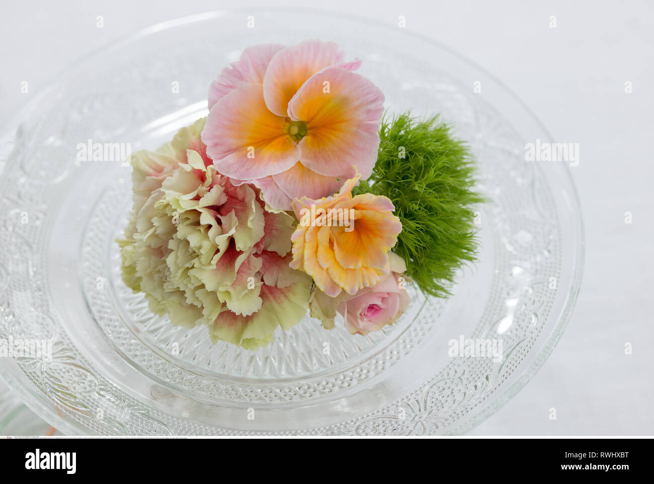 botany, polyanthrus blossoms on nostalgic gl, Caution! For Greetingcard-Use / Postcard-Use In German Speaking Countries Certain Restrictions May Apply - Stock Image