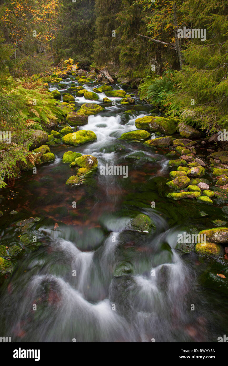 The stream Njupan in autumn. - Stock Image