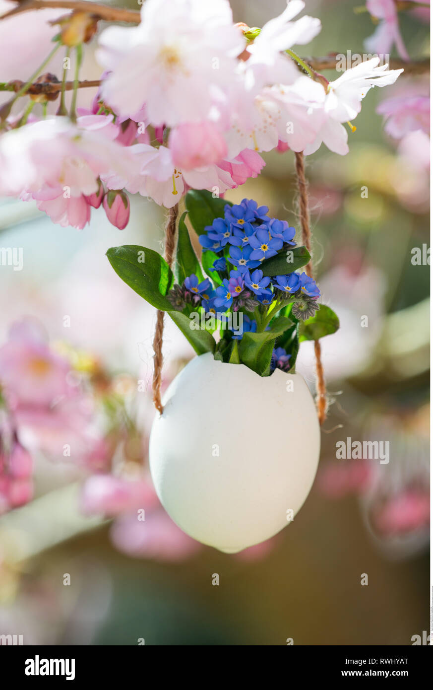 botany, forget-me-not in exhaust egg, Caution! For Greetingcard-Use / Postcard-Use In German Speaking Countries Certain Restrictions May Apply Stock Photo