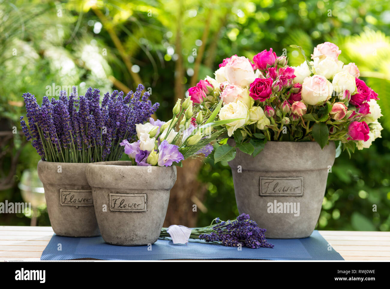 botany, summerly decoration with lavender, No-Postcard-Use in German speaking countries! - Stock Image
