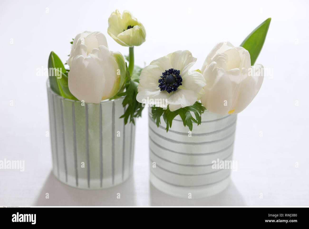 botany, spring flower in satin glass vases, Caution! For Greetingcard-Use / Postcard-Use In German Speaking Countries Certain Restrictions May Apply - Stock Image