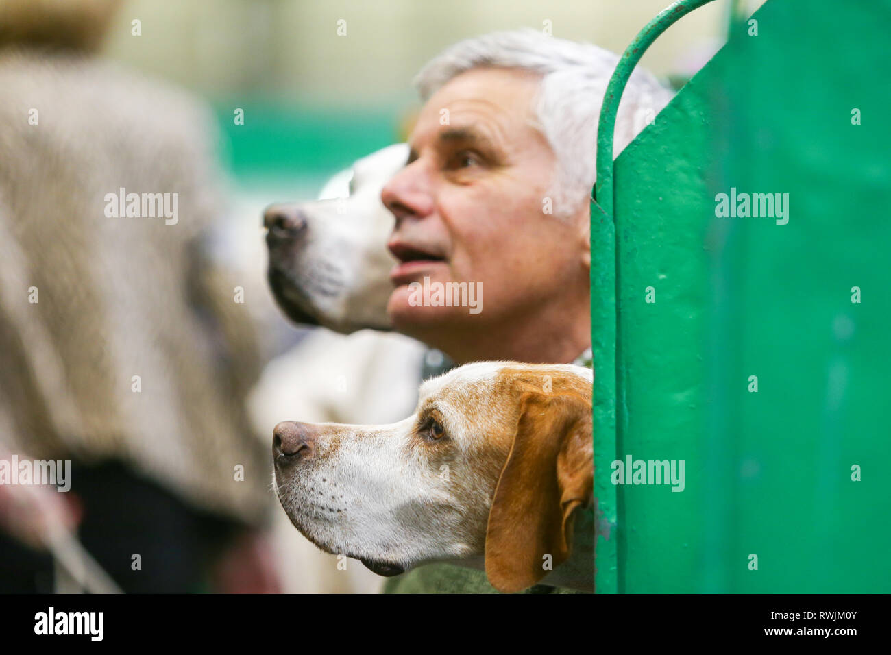 Dog Show Ring Stock Photos & Dog Show Ring Stock Images - Alamy