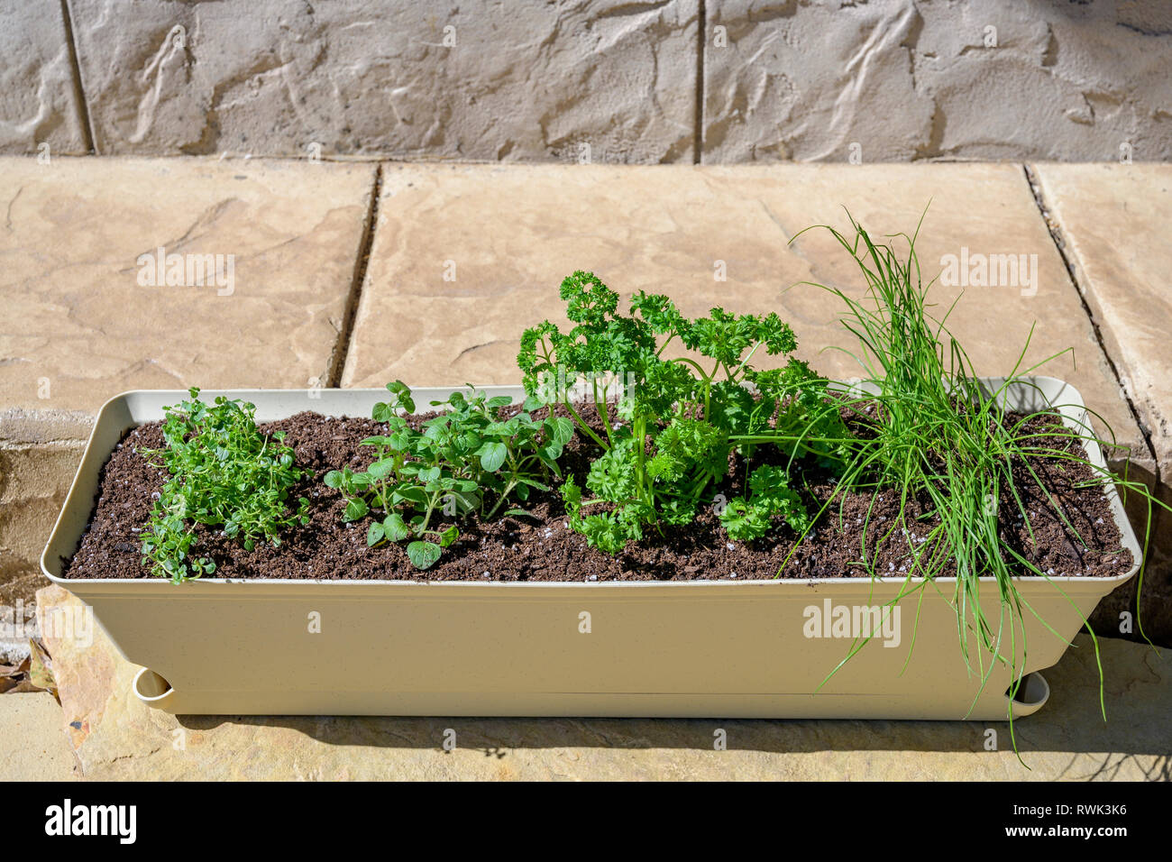 Organic garden fresh herbs, oregano, chives, parsley, and lemon thyme growing in a window box. Stock Photo
