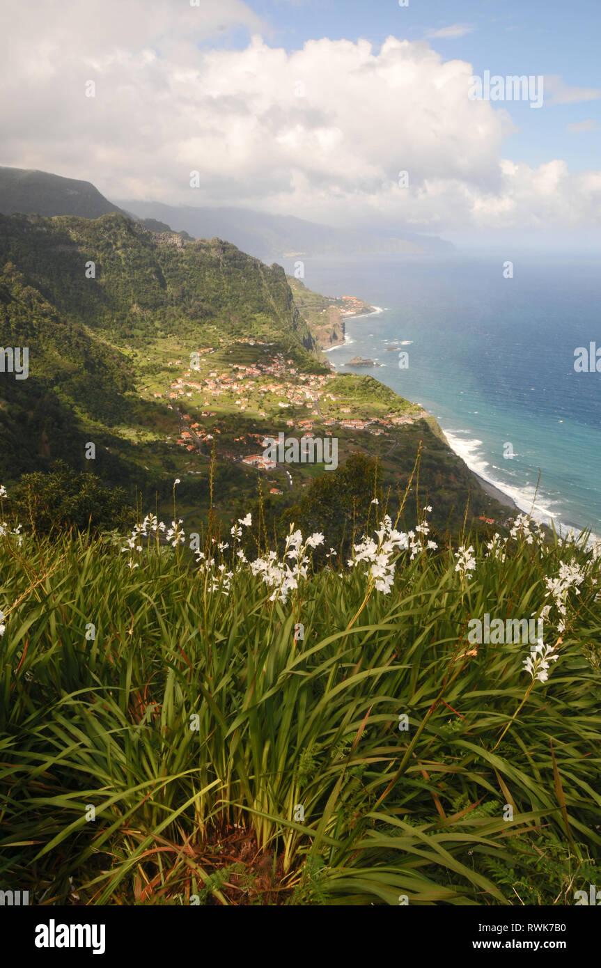Wild flowers overlooking Ribeira da Janela, Madeira - Stock Image