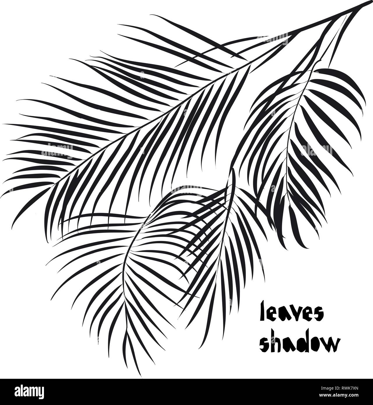 Pattern With Black Areca Palm Tropical Leaves Silhouette Shadow