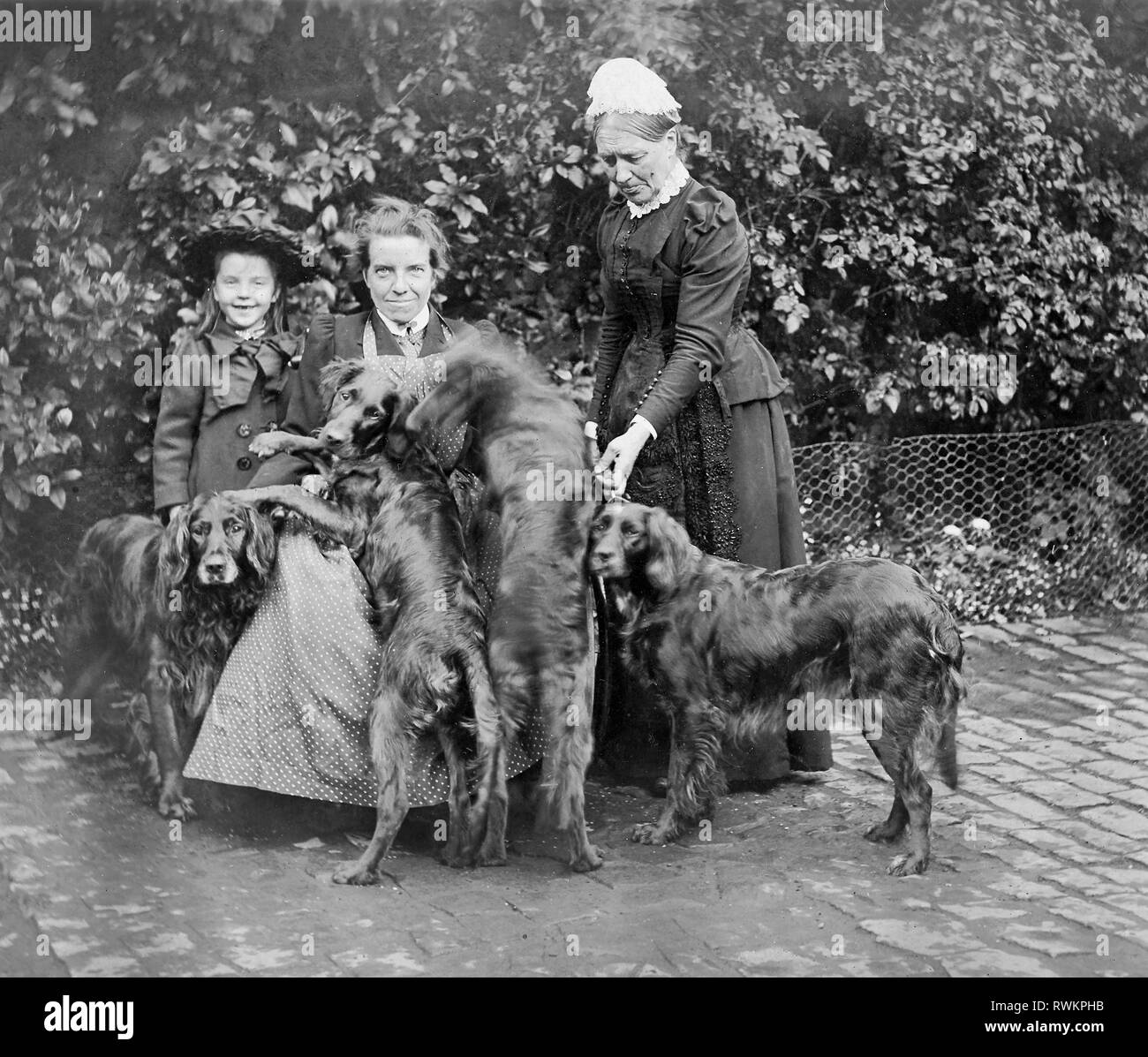A Victorian or Edwardian group photograph of a young girl, two female adults and what looks like four Flat-coated Retriever dogs. - Stock Image