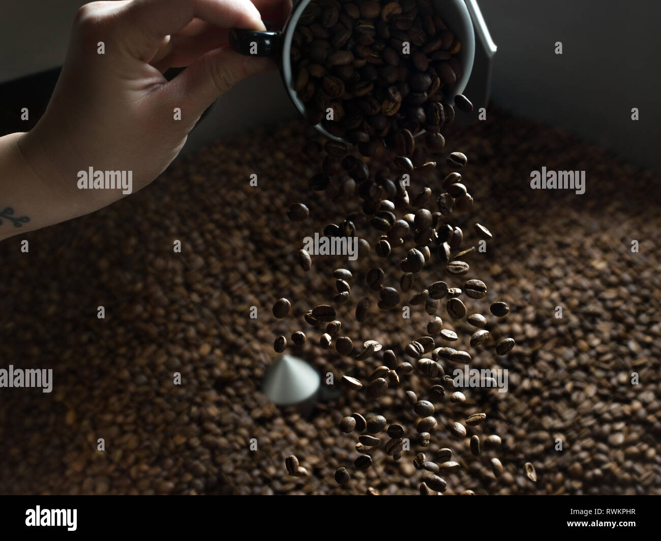 Hand pouring coffee beans into coffee roaster Stock Photo