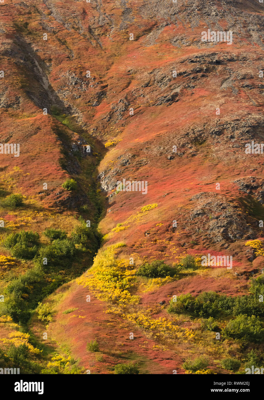 Steep gully cutting deep into rocky Alaskan hillside in fall colors - Stock Image