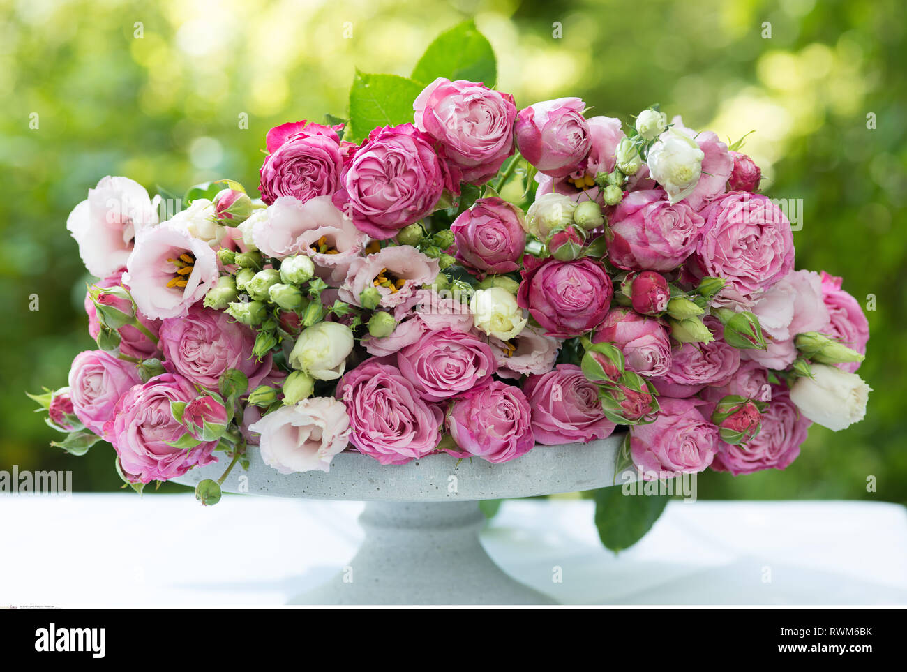 botany, pink cut flowers, Caution! For Greetingcard-Use / Postcard-Use In German Speaking Countries Certain Restrictions May Apply - Stock Image
