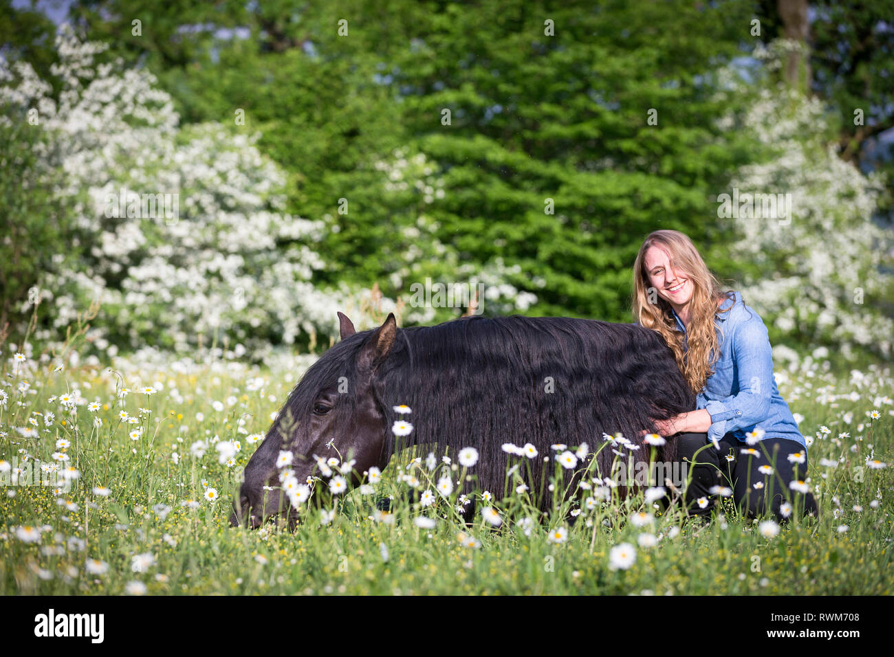 Lusitano. Juvenile black stallion lying on a pasture in spring, with a smiling young woman. Switzerland - Stock Image