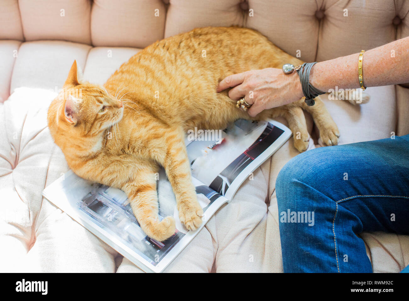 Mature woman sitting on sofa petting ginger cat, cropped - Stock Image