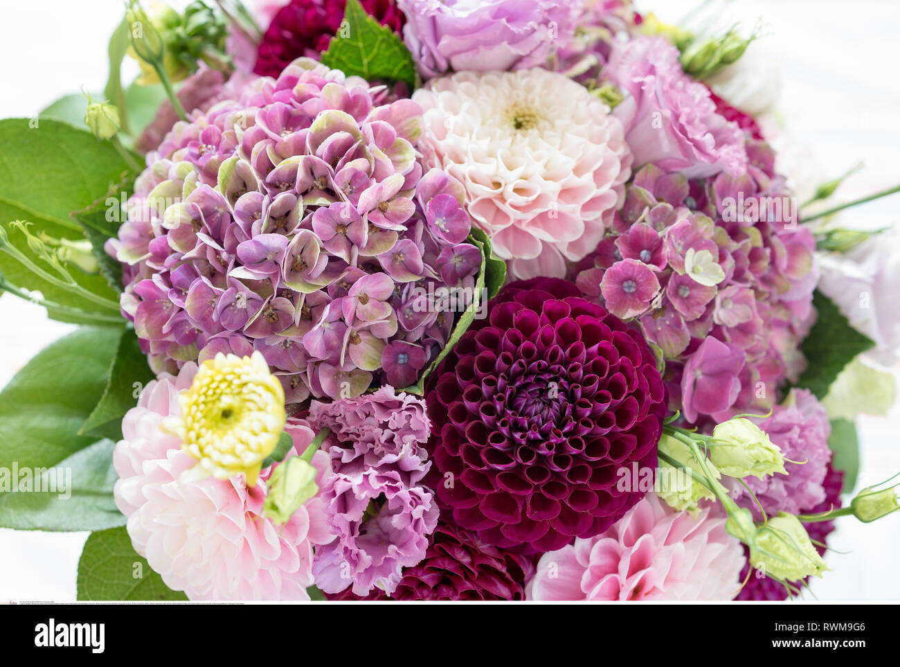 botany, bunch with Dahlen and hydrangea blos, Caution! For Greetingcard-Use / Postcard-Use In German Speaking Countries Certain Restrictions May Apply - Stock Image