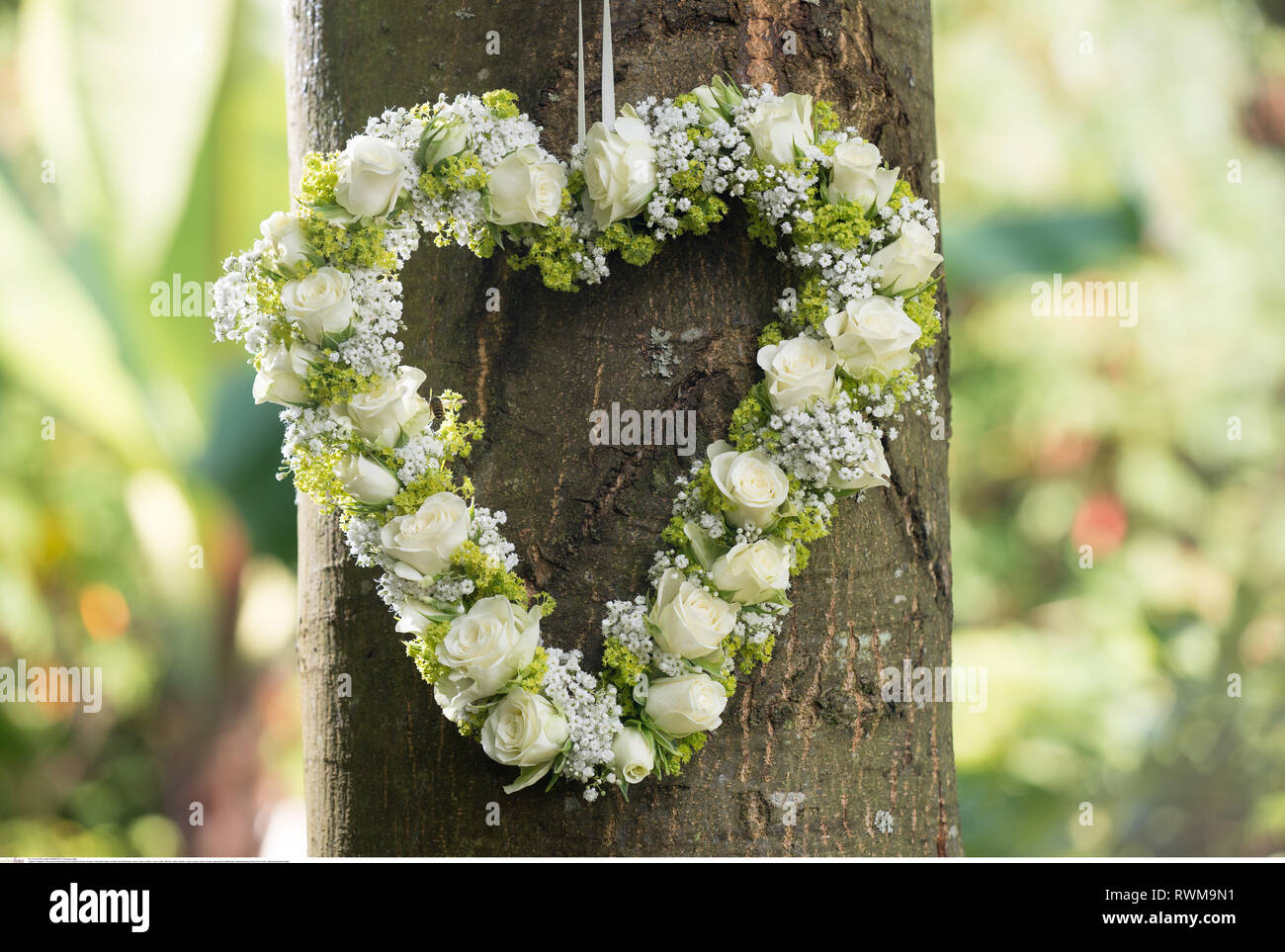 botany, heart with baby's breath and whitewa, Caution! For Greetingcard-Use / Postcard-Use In German Speaking Countries Certain Restrictions May Apply - Stock Image