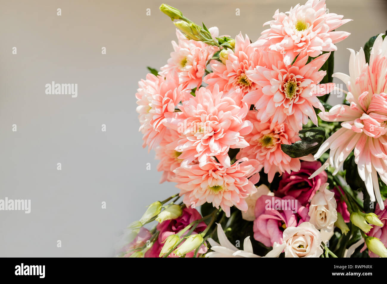 Very beautiful tender blossoming bouquet of fresh hydrangea, eustoma, roses, eucalyptus flowers in pastel pink and cream colours on the grey wall Stock Photo