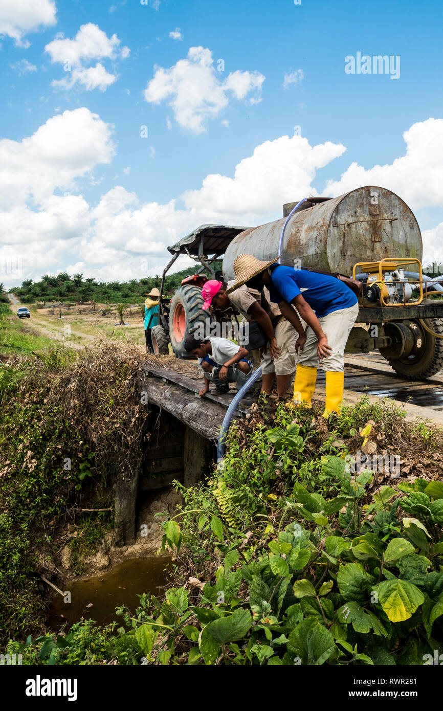 Newly planted palm tree watering activities in replanting areas during the dry season prevent losses from tree mortality - Stock Image