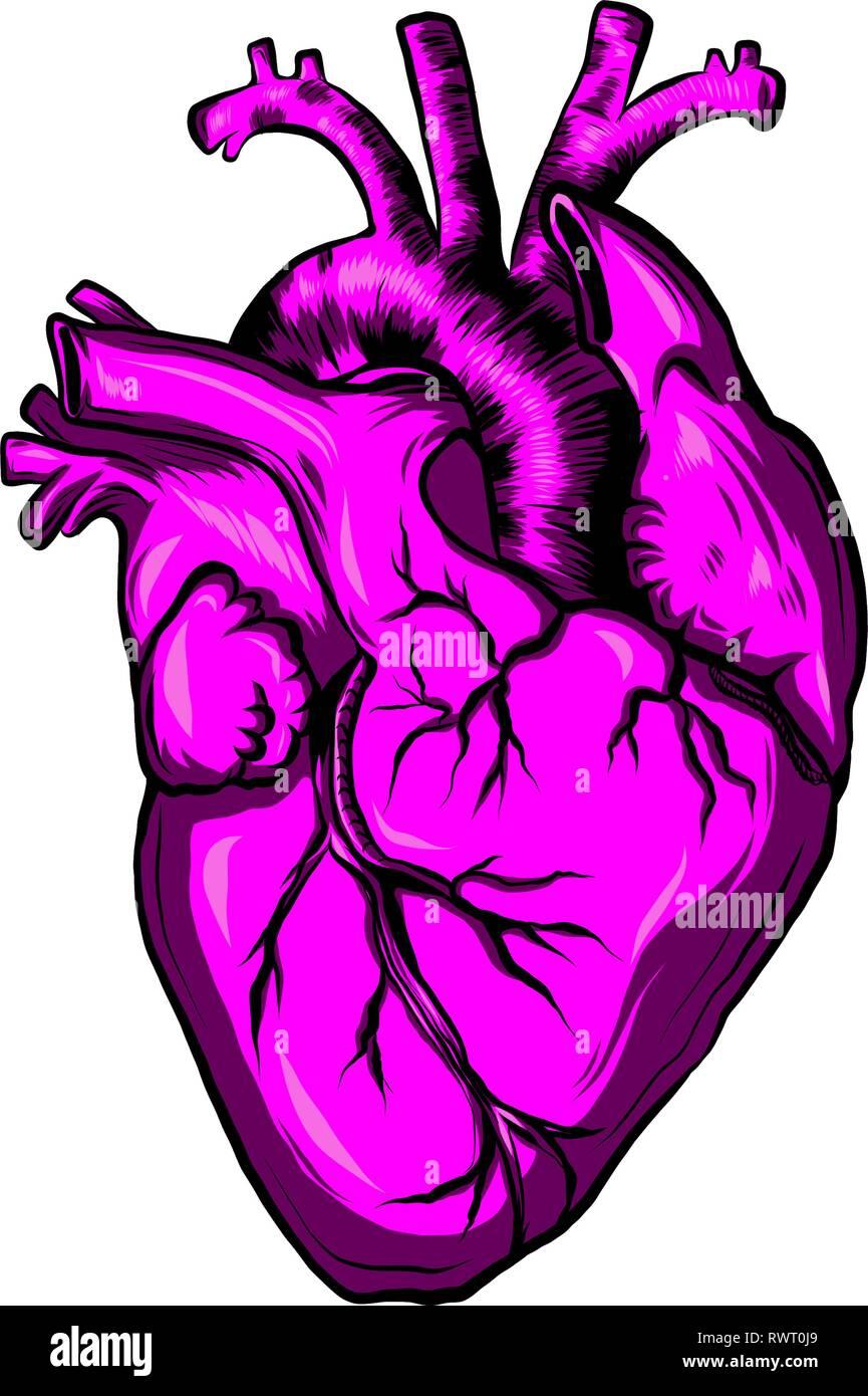 illustration of colorful human heart of fuchsia - Stock Image