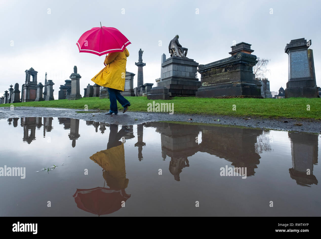 Woman in yellow coat and red umbrella reflected in puddle walking in Necropolis cemetery in Glasgow, Scotland, UK - Stock Image