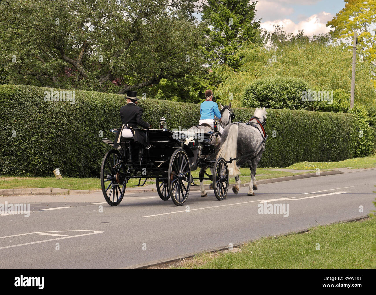 Pony and trap driven by two grey horses, along an English country road - Stock Image