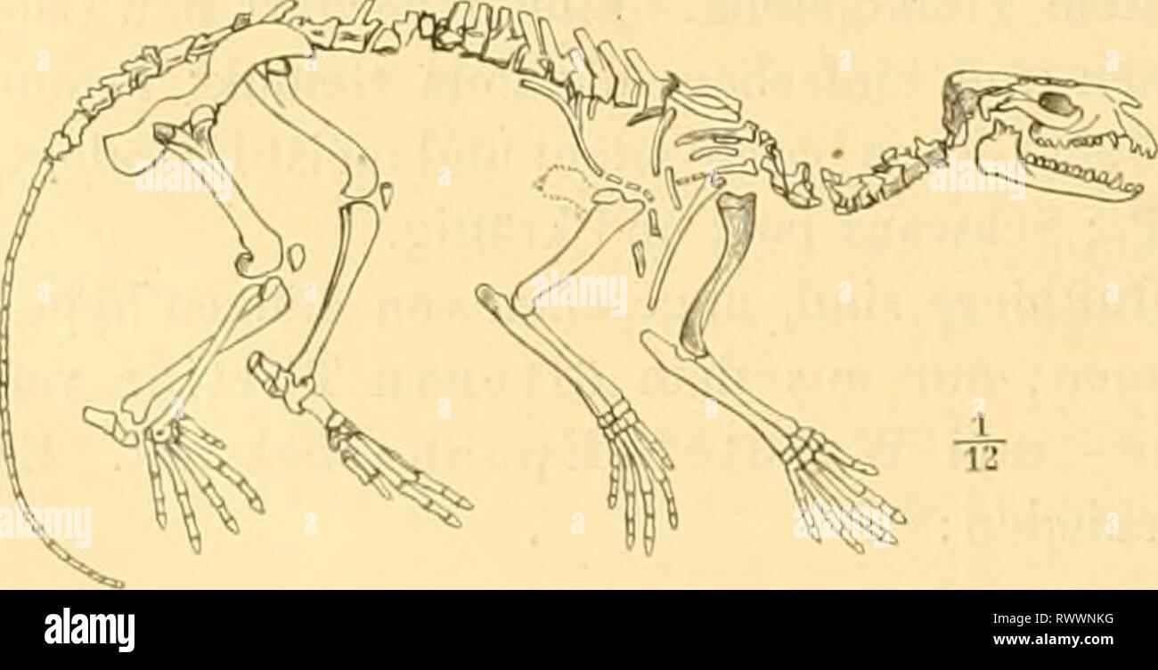 Elemente der paläontologie bearbeitet (1890) - Stock Image
