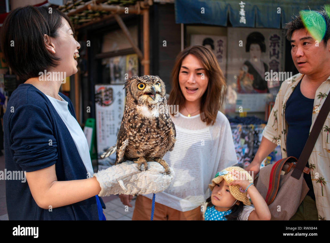 Owl cafe. Young Japanese woman advertising and promoting local bar where customers can pet and touch wild animals. Asakusa district, Tokyo, Japan, Asi - Stock Image