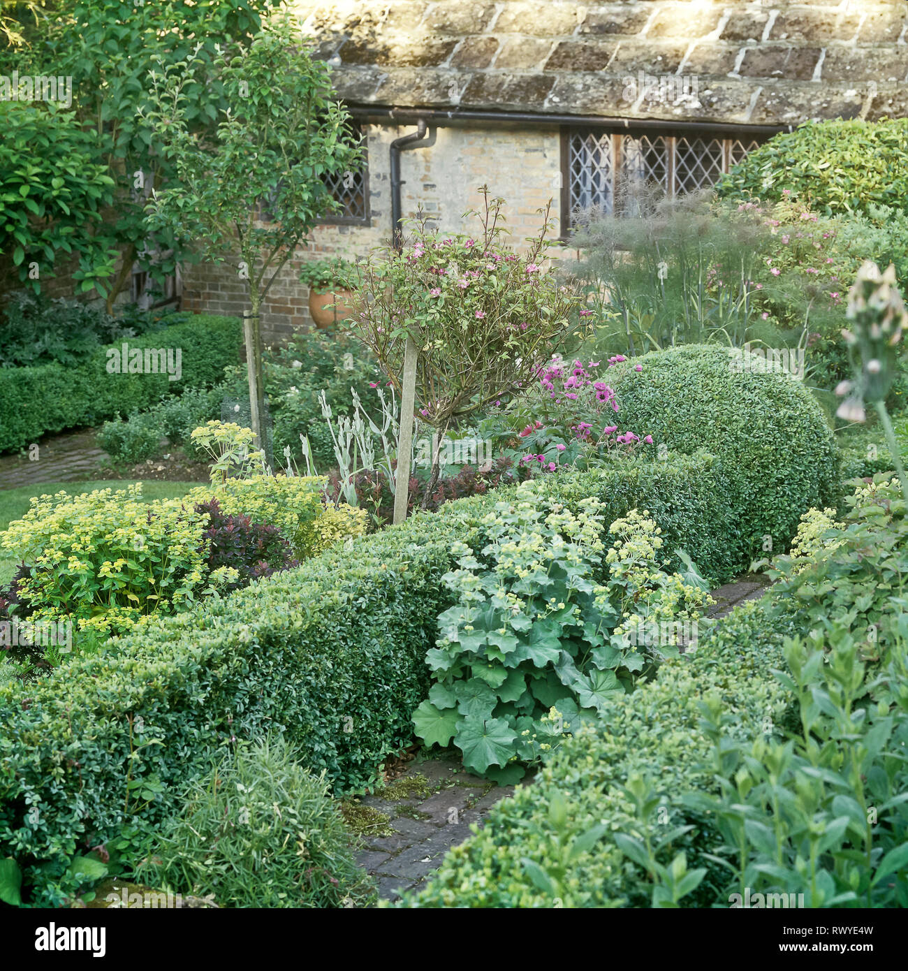 Garden with hedge - Stock Image