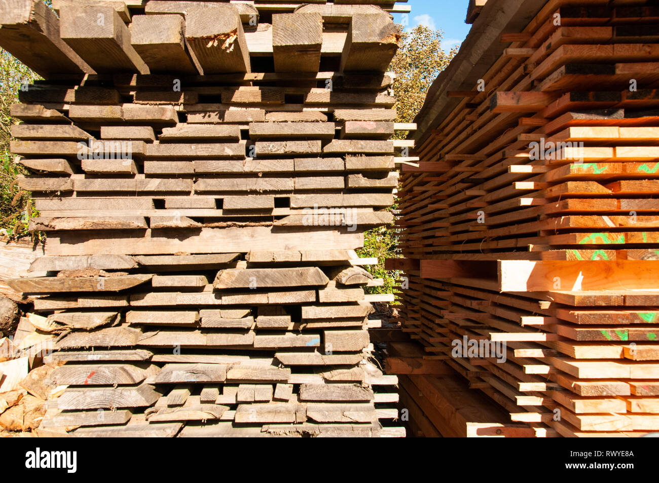 Lengths of timber stacked in yard, Cornwall - Stock Image