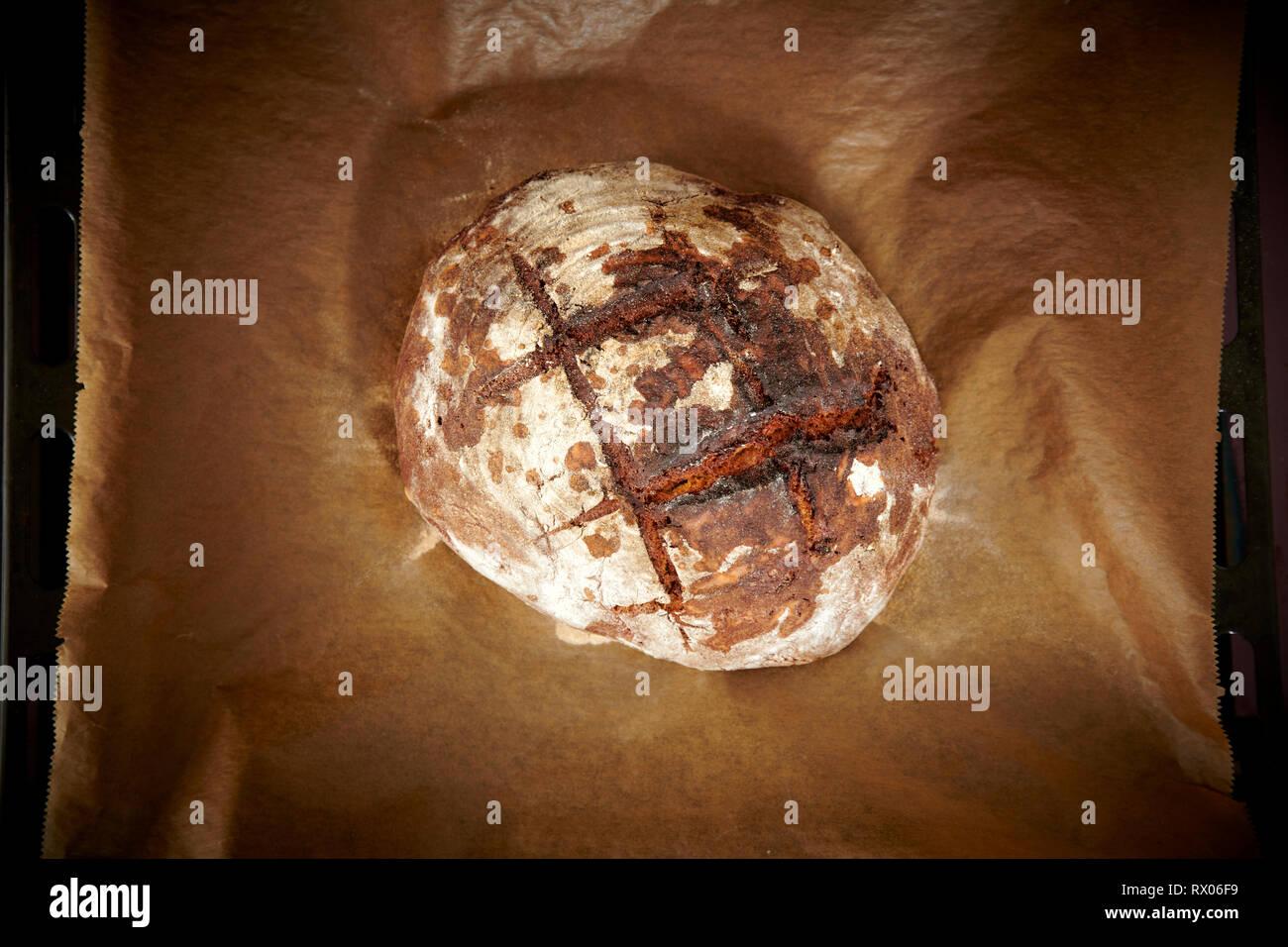 Selbstgebackenes Sauerteigbrot liegt auf Backpapier nach dem es aus dem Ofen geholt wurde. - Stock Image