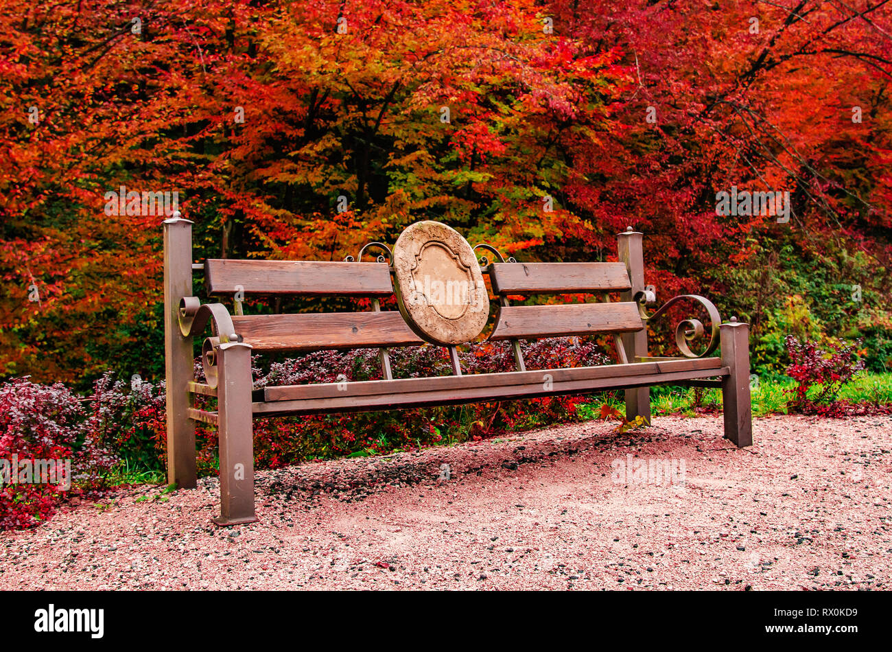 Autumn Forest Landscape Old Bench In The Autumn Park Stock