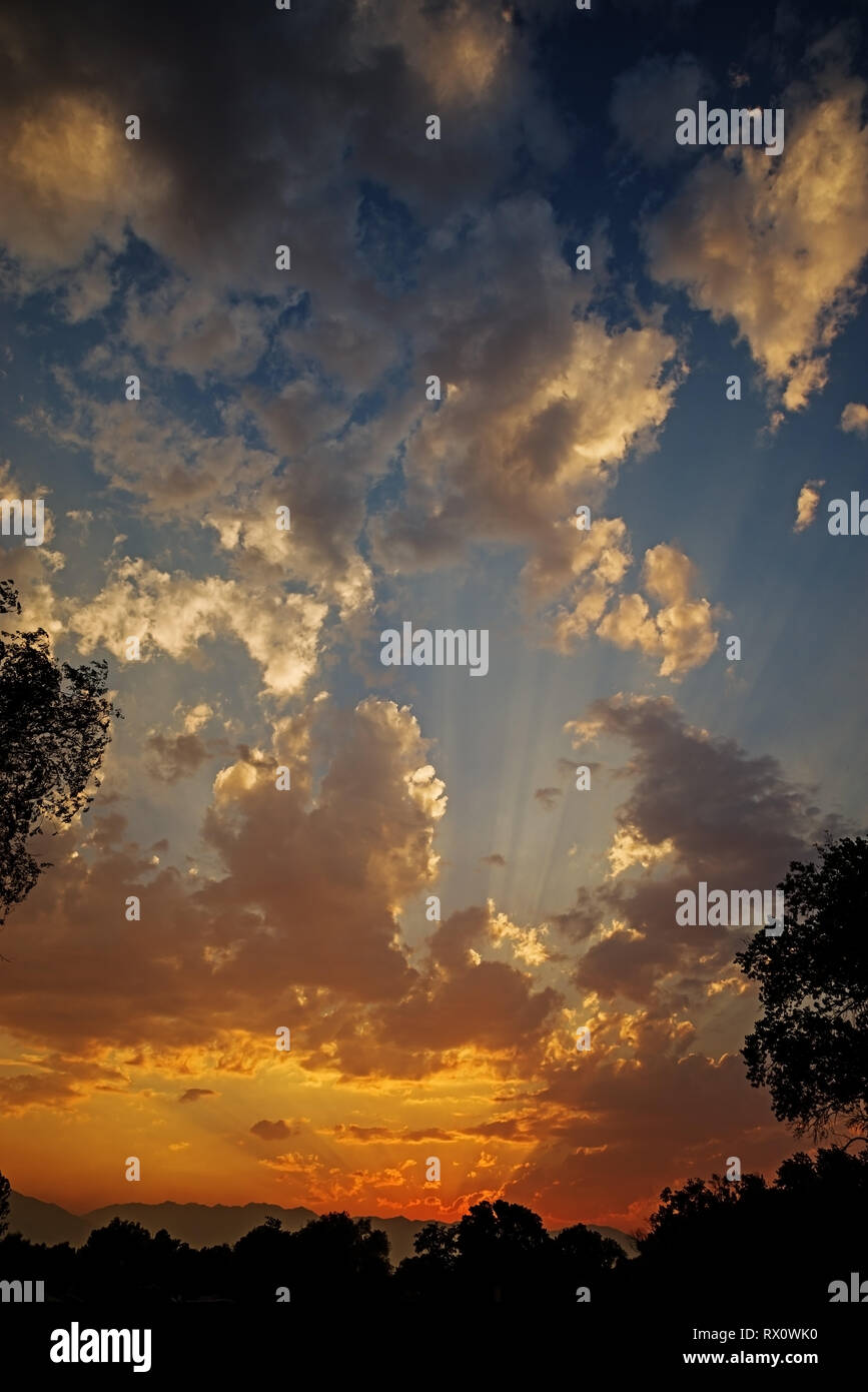 vertical sunset image between trees with clouds and sunrays - Stock Image