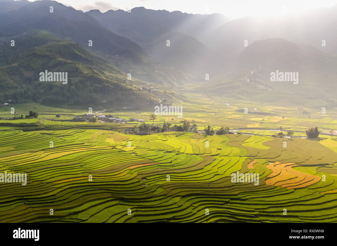Valley of Rice - Stock Image