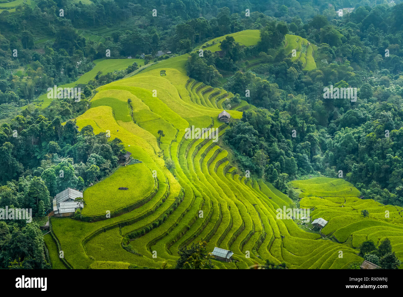 Rice terraces in Ha Giang - Stock Image