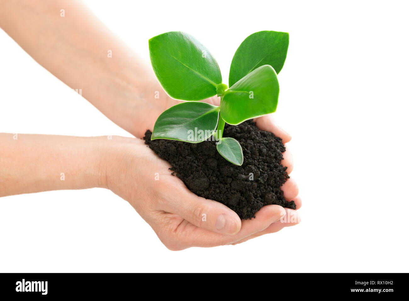 Hands holding green plant ecology concept - Stock Image