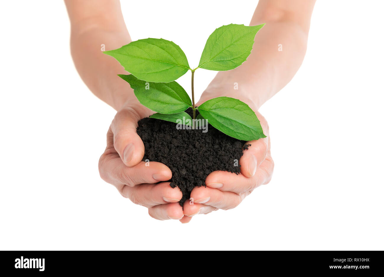 Hands holding green plant new life concept - Stock Image